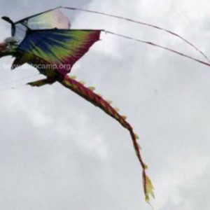 Fire dragon kite in Purple from X-Kites with 195cm wingspan